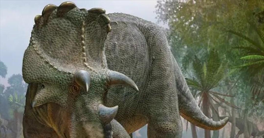Ανακαλύφθηκε άγνωστος δεινόσαυρος με μεγάλα κέρατα