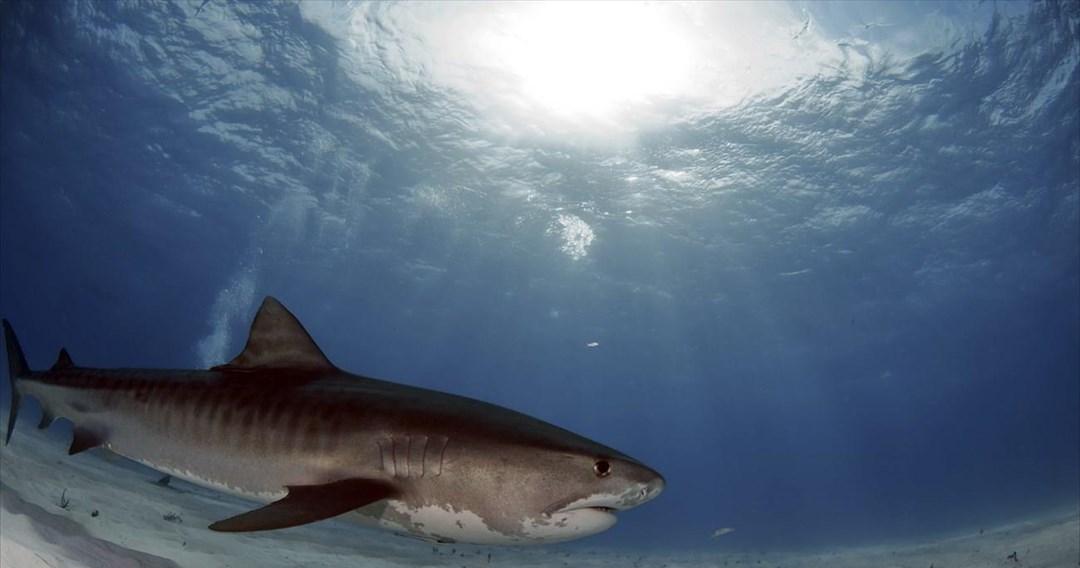 Μυστηριώδες γεγονός παραλίγο να εξαφανίσει τους καρχαρίες